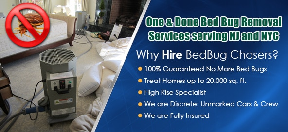 What do Bed Bugs look like New Jersey , What do Bed Bugs look like NJ , How to get Rid of Bed Bugs New Jersey , How to get Rid of Bed Bugs NJ , Bed Bug Dog New Jersey , Bed Bug Dog NJ ,