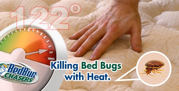 Car Bed Bug Treatment , Get Rid of Bed Bugs in my Car , Get Rid of Bed Bugs in my Truck , Get Rid of Bed Bugs in my Tractor Trailer , Get Rid of Bed Bugs in my Van , Bed Bug Exterminator New Jersey , Bed Bug Exterminator NJ , Bed Bug Heat Treatment New Jersey , Bed Bug Heat Treatment NJ ,