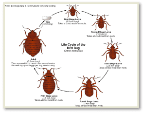 Get Rid of Bed Bugs New Jersey , Get Rid of Bed Bugs NJ , Bed Bug Spray New Jersey , Bed Bug Spray NJ ,