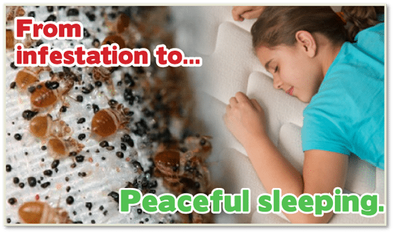 Bed Bug Heat Treatment New Jersey , Bed Bug Heat Treatment NJ , Kill Bed Bugs New Jersey , Kill Bed Bugs NJ , Chemical Free Bed Bug Treatment New Jersey , Chemical Free Bed Bug Treatment NJ , Bed Bug Spray New Jersey , Bed Bug Spray NJ ,
